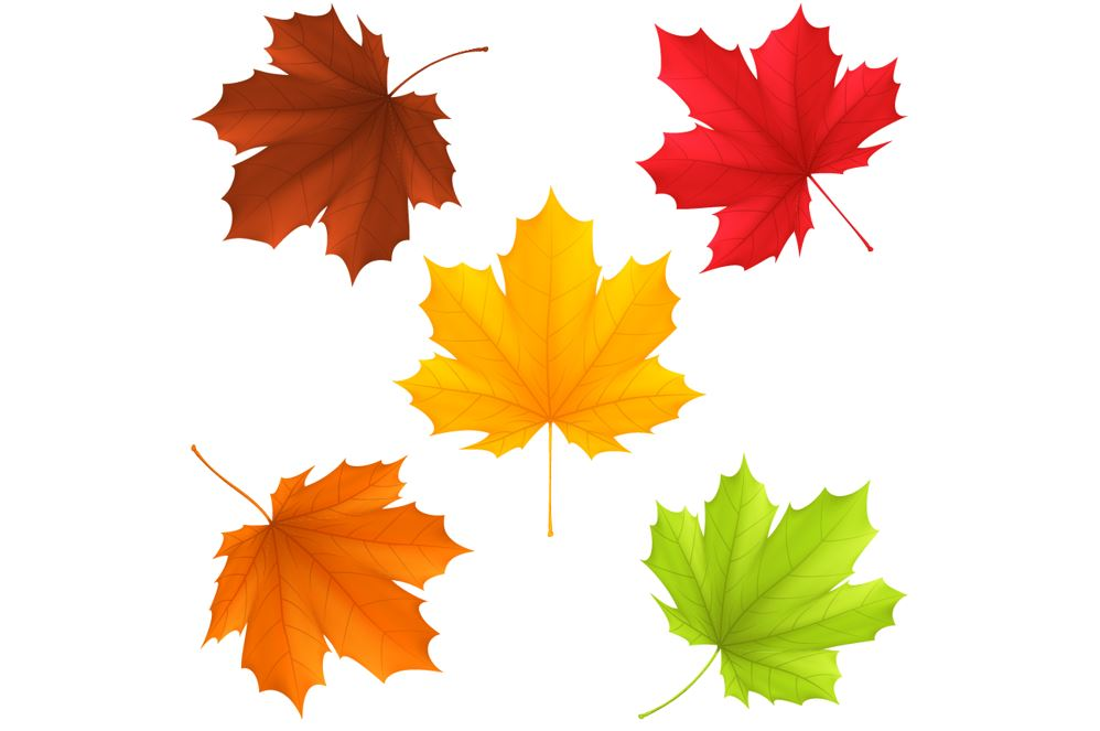 Why Do Leaves Change Color? Educational Resources K12 Learning