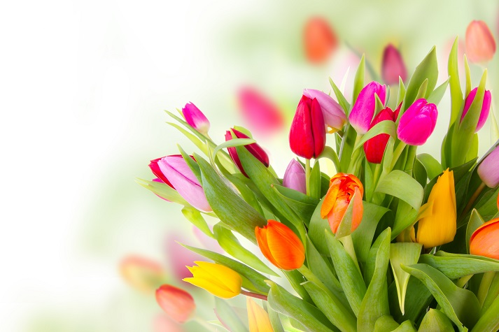 Timid Tanya Thanked Tina for the Tall Tulips Educational Resources K12 Learning