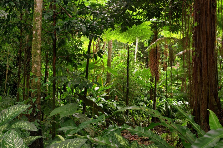 Tropical Rainforests: Review Educational Resources K12 Learning