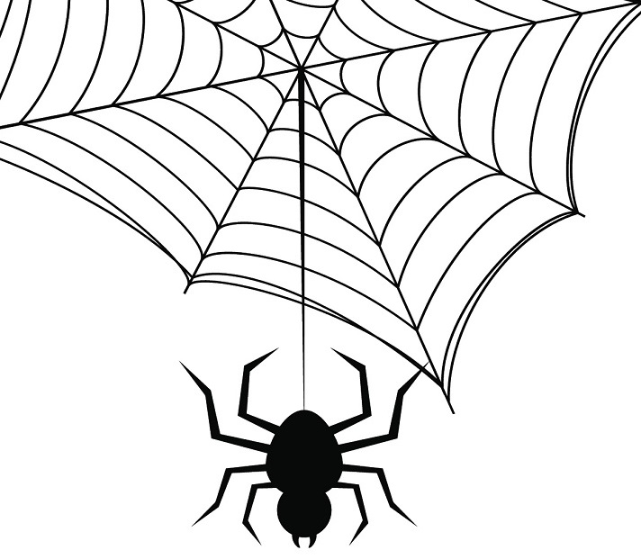 Arachnids Educational Resources K12 Learning