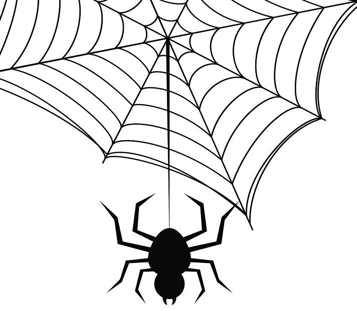Arachnids Educational Resources K12 Learning