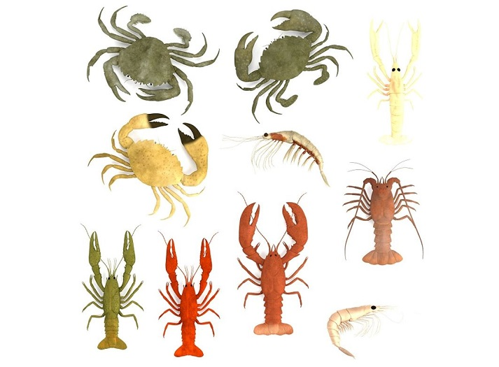 Crustaceans Educational Resources K12 Learning