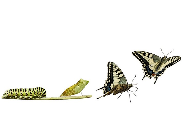 Life Cycle of a Butterfly Educational Resources K12 Learning