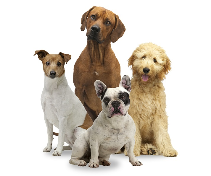 All About Dogs! Educational Resources K12 Learning