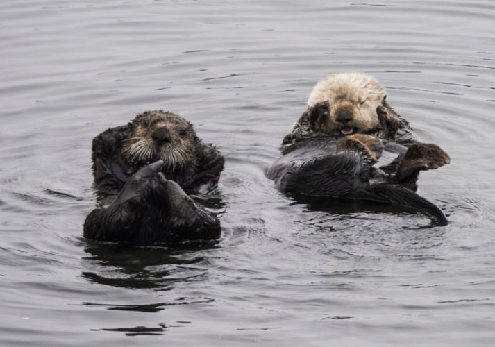 Sea Otters Educational Resources K12 Learning