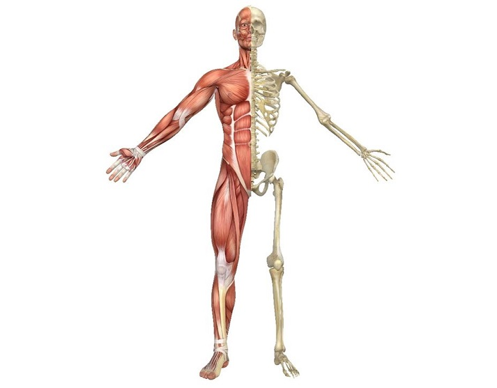 Basics of the Skeletal System Educational Resources K12 Learning