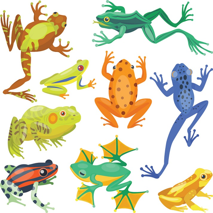 Animal Classification: Amphibians Educational Resources K12 Learning