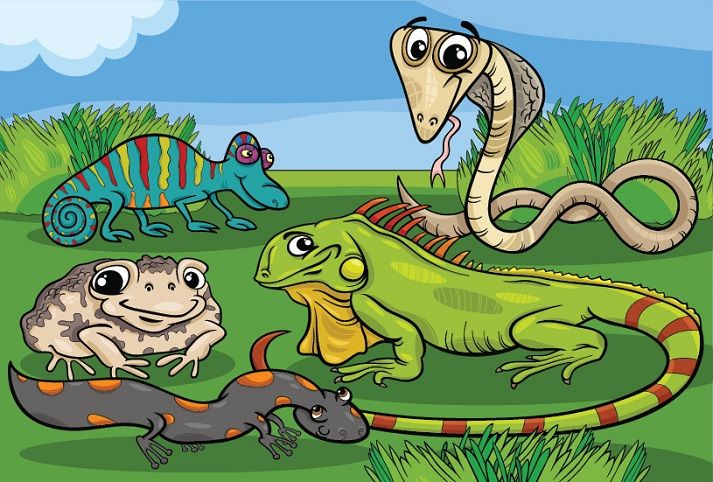 Animal Classification: Reptiles Educational Resources K12 Learning