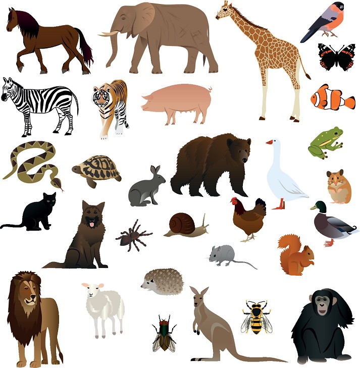 What Animals Eat: Project Educational Resources K12 Learning