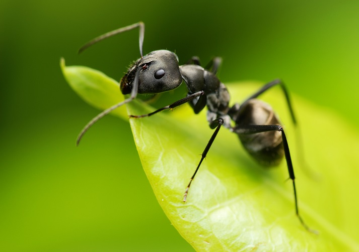 All About Ants! Educational Resources K12 Learning