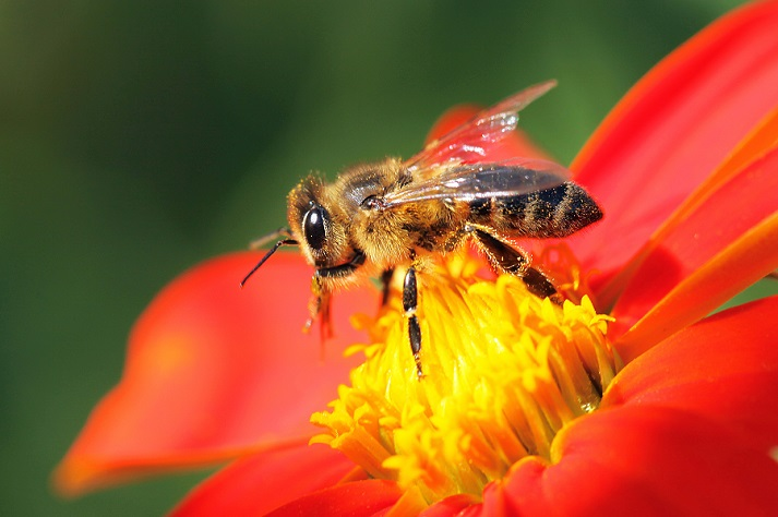 Beautiful Bees! Educational Resources K12 Learning