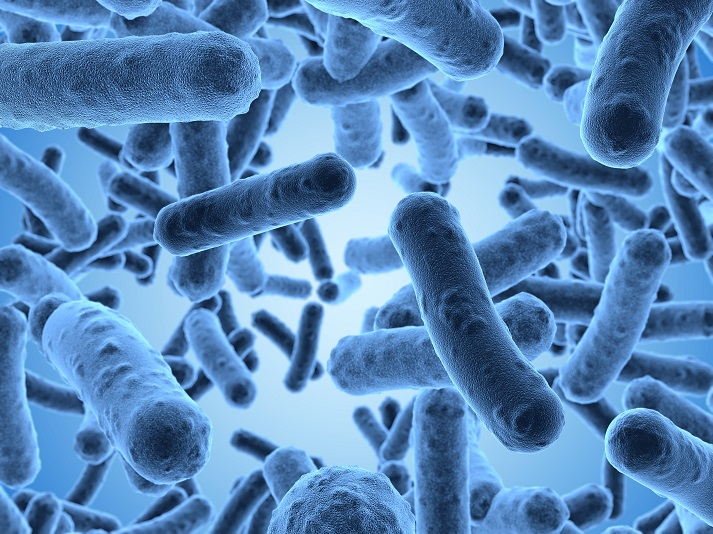Bountiful Bacteria Educational Resources K12 Learning