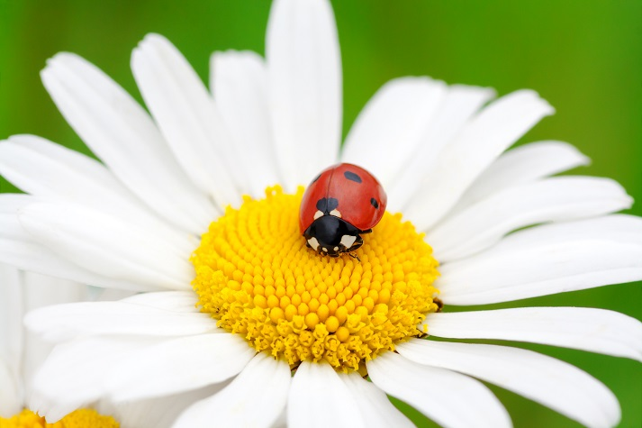 Bugs Make Flowers Grow Educational Resources K12 Learning