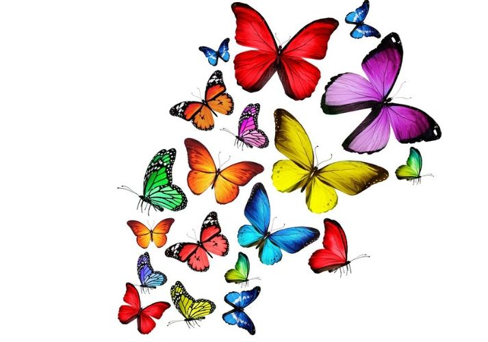 The Life Cycle of a Butterfly: Part 1 Educational Resources K12 Learning