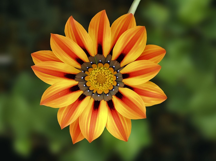 What Are the Parts of a Flower? Educational Resources K12 Learning