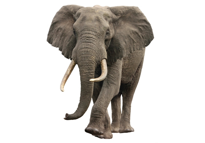 Elephants Educational Resources K12 Learning
