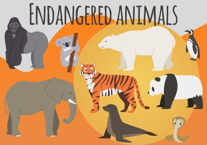 Why Are Species Endangered? Educational Resources K12 Learning