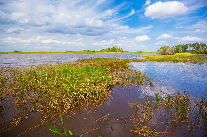 Everglades National Park Educational Resources K12 Learning