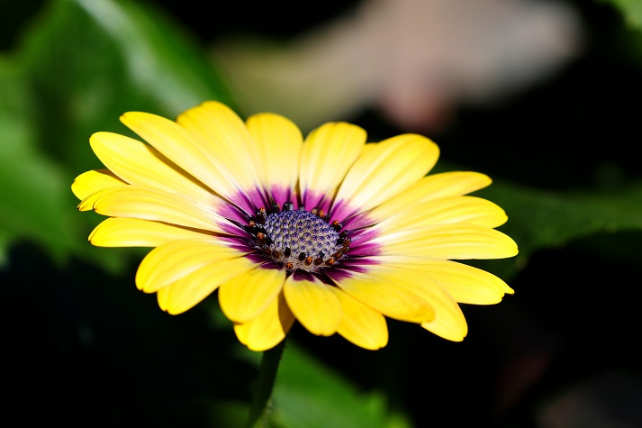 Flowers: Beauty Is Not Their Only Role in Nature Educational Resources K12 Learning