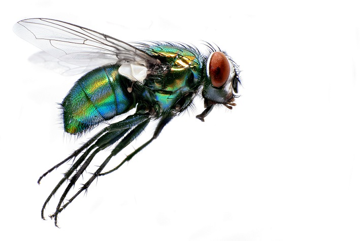 What Do You See Through Your Eye, Mr. Fly? Educational Resources K12 Learning