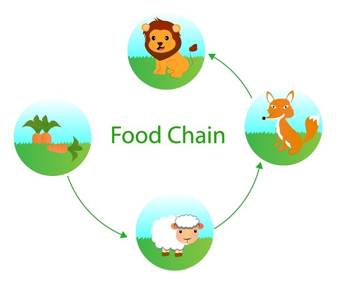 Food Chains Educational Resources K12 Learning