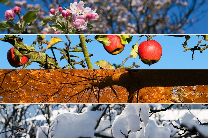 Create and Describe Patterns 2: Spring Time Educational Resources K12 Learning