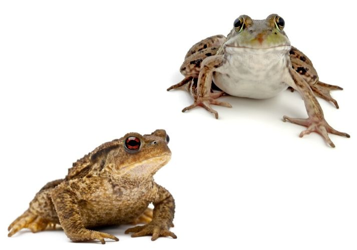 Frogs and Toads Educational Resources K12 Learning
