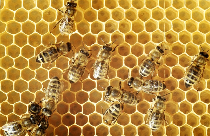 What's All the Fuss About Honey Bees? Educational Resources K12 Learning