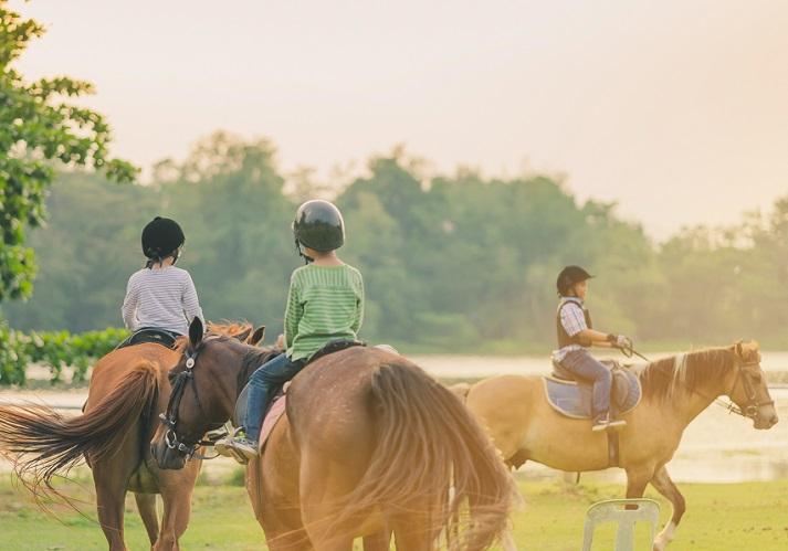 Horses Educational Resources K12 Learning