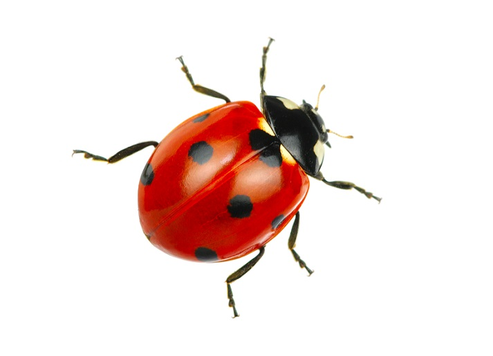 The Life Cycle of a Ladybug: Part 2 Educational Resources K12 Learning