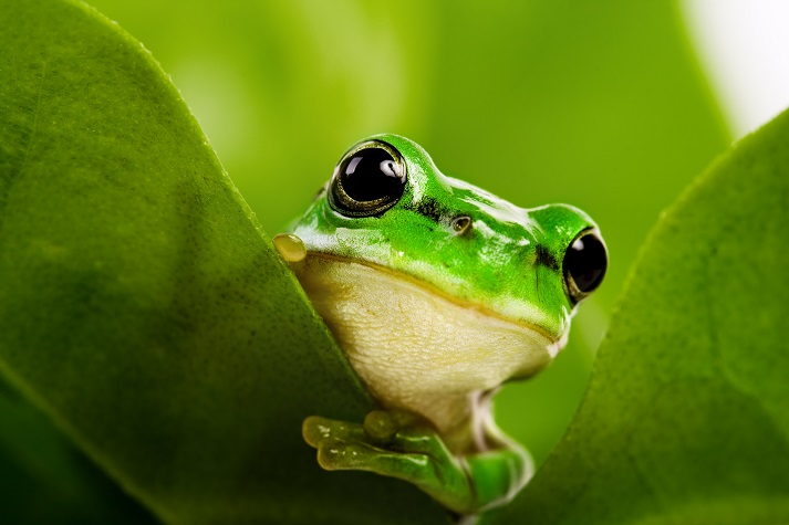 The Life Cycle of a Frog: Part 1 Educational Resources K12 Learning