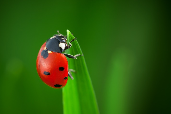 The Life Cycle of a Ladybug: Part 1 Educational Resources K12 Learning
