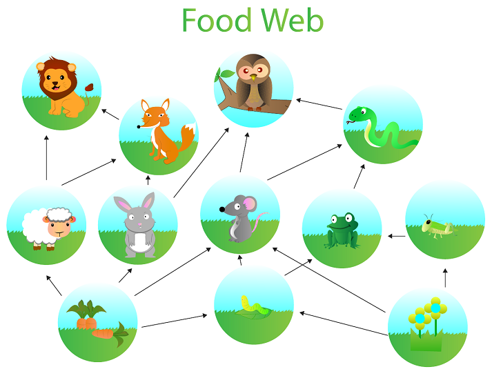 Living Organisms: Food Webs Educational Resources K12 Learning