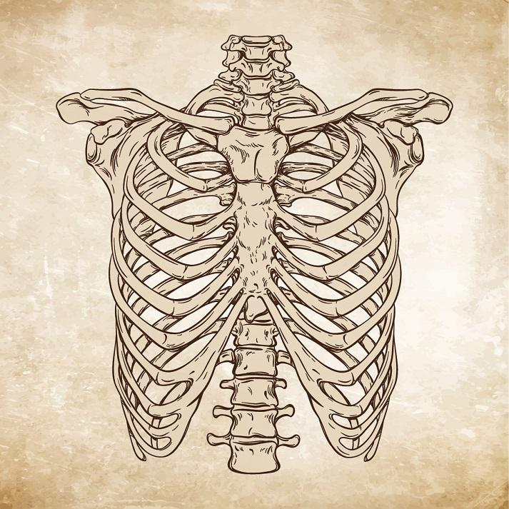 Medical Illustration Educational Resources K12 Learning