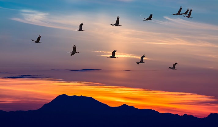 How Birds (and Other Animals) Migrate Successfully Educational Resources K12 Learning