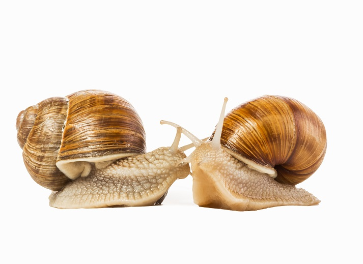 Mollusks Educational Resources K12 Learning