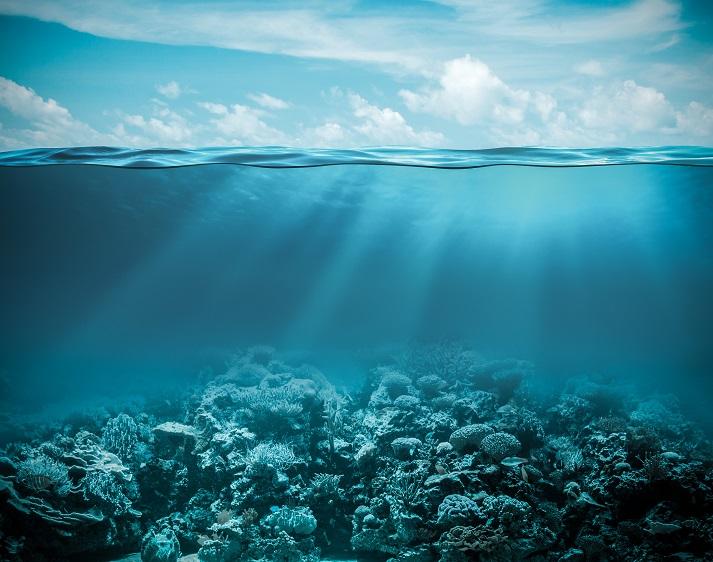 Ocean Zones Educational Resources K12 Learning