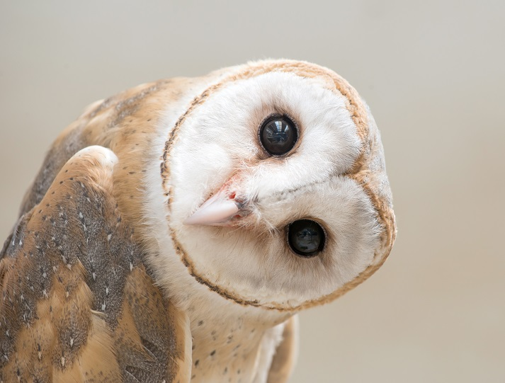 Owls Educational Resources K12 Learning