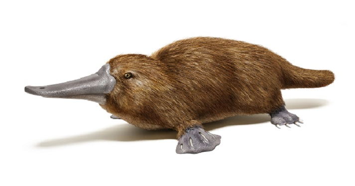 Platypus Educational Resources K12 Learning