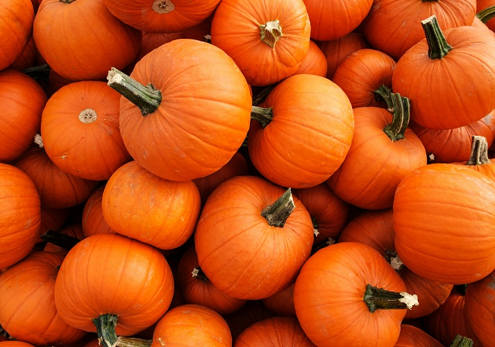 The Life Cycle of a Pumpkin Educational Resources K12 Learning