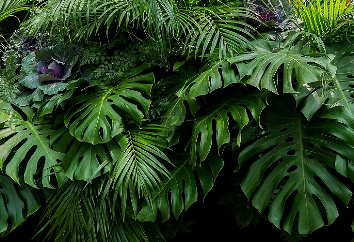 Tropical Rainforests: Plants Educational Resources K12 Learning