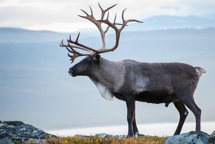 Santa's Reindeer Educational Resources K12 Learning