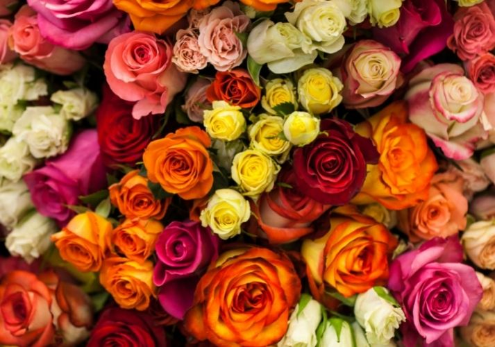 A Rose by Any Other Name Educational Resources K12 Learning