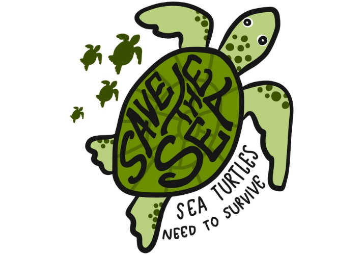 Protecting Sea Turtles Educational Resources K12 Learning