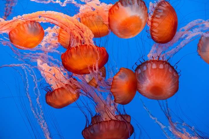 Jellyfish Educational Resources K12 Learning