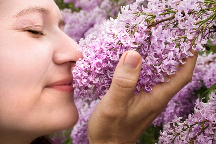 Our Sense of Smell Educational Resources K12 Learning