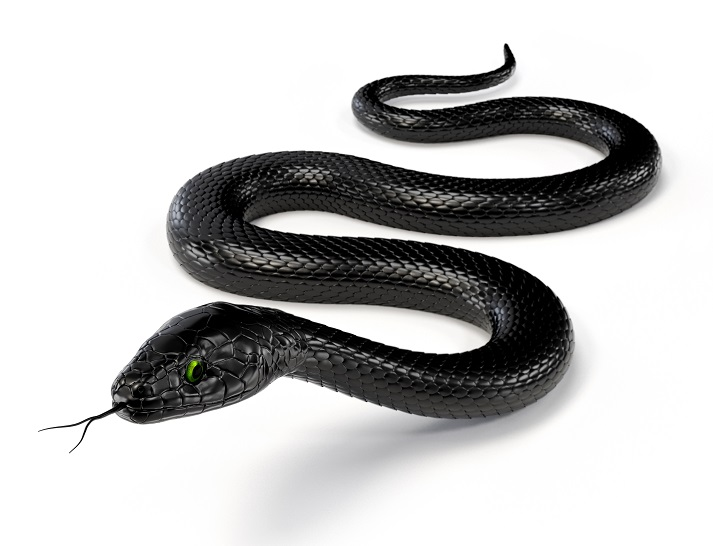 Snakes Educational Resources K12 Learning