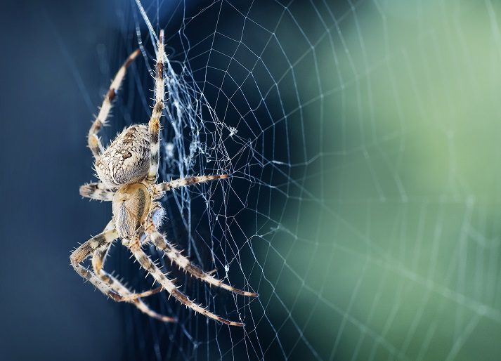 All About Spiders Educational Resources K12 Learning