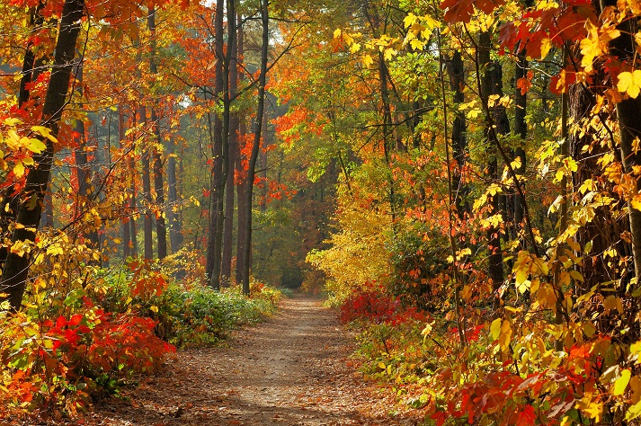 Temperate Deciduous Forests: Plants Educational Resources K12 Learning