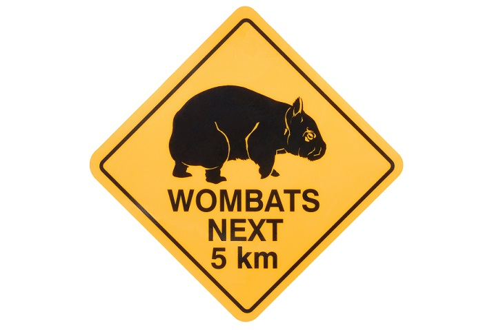 Marsupials: Wombats Educational Resources K12 Learning